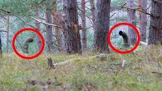 Notaron estos extraños tubos que salían de la tierra. ¡No creerás lo que encontraron debajo!