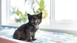 Webinar 4: Feral Felines & Kittens Found Outdoors