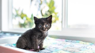 Webinar 4: Feral Felines & Kittens Found Outdoors