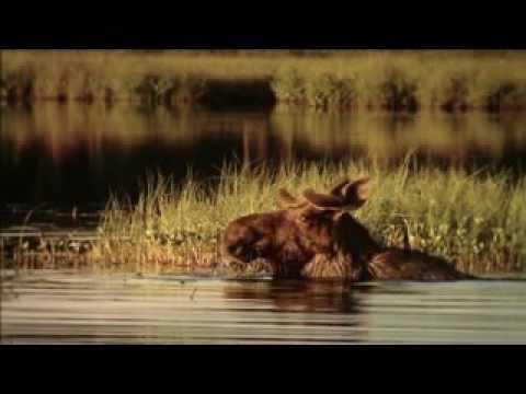 EDEN 2008 - Wild Taiga (Finland) short version