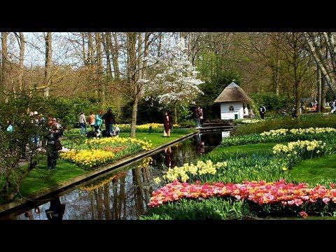 Королевский парк цветов Кёкенхоф в Голландии. Это круто!
