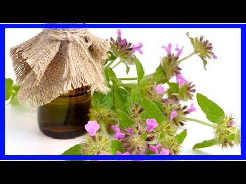 13-best-benefits-of-pennyroyal-essential-oil