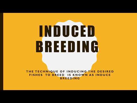 Induced Breeding  In Aquaculture