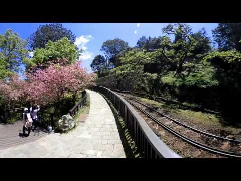 阿里山沼平櫻之道、小火車360全天域環景測試