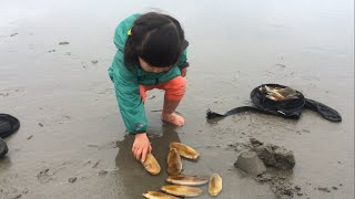Razor clam digging - fun activity for little kids!