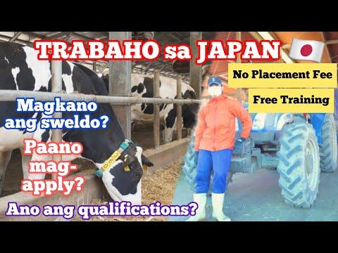 Buhay OFW sa JAPAN ep. 3 : DAIRY FARMER