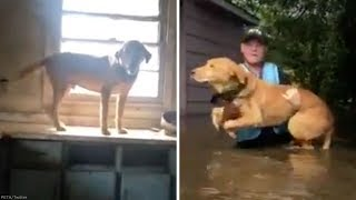Rescued dog climbed onto counter to escape Florence flooding