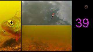39- Поклевки Окуней на поплавочную удочку. Рыбалка. Подводные съемки с 2-х камер. fishing