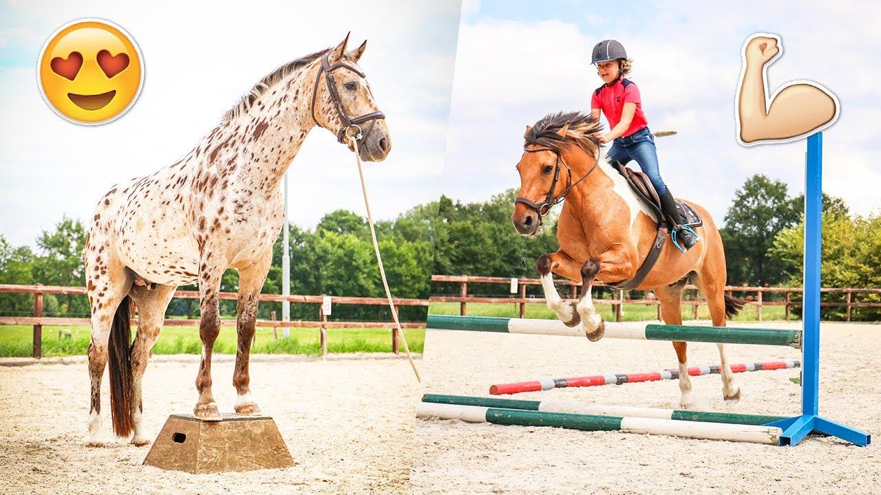 De paarden verhuizen van stal & VALLEN van Arena! | felinehoi WEEKVLOG #277/2