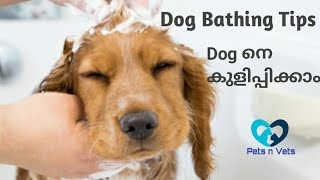 How to bath a dog malayalam|Dog grooming|Puppy bathing tips malayalam