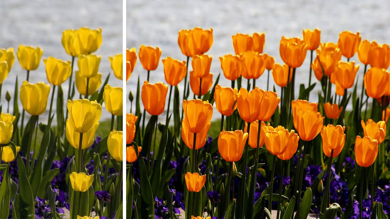 how to change the colour of flowers in photoshop