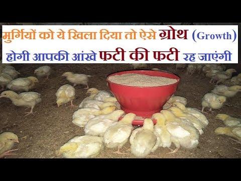 मुर्गियों में जल्दी ग्रोथ के लिए क्या खिलाये | poultry growth promoter crd asites mortality