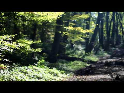 [10 Hours] Sunny Autumn/Fall Forest - Video & Soundscape [1080HD] SlowTV