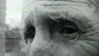 Filme amador: O funeral do lavrador-filmado em Angatuba-1978