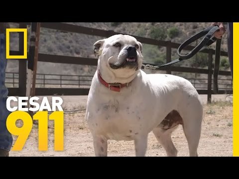 Case File: Gunny and Bastian | Cesar 911