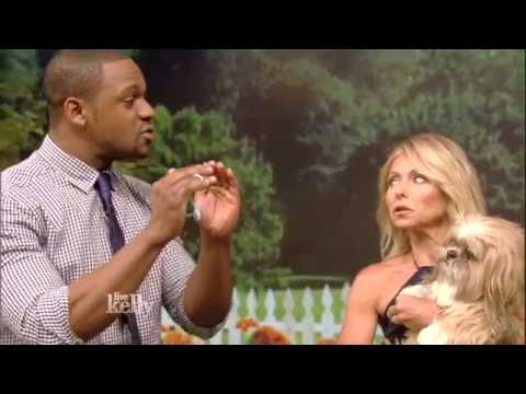 Courtney Campbell - Veterinarian -  Live with Kelly! - Grooming Tips @DrCourtneyDVM