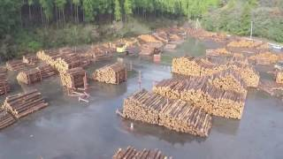 地域環境科学部 森林総合科学科