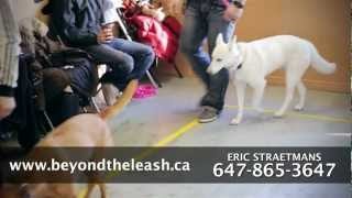 Beyond The Leash K9 Training Dog Training School T.v. Commercial...60 Second Edit Version.