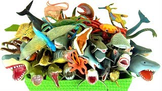Box Full of Toys SEA ANIMALS for Children Learn Ocean Sea Creatures Names Toy Videos for Kids