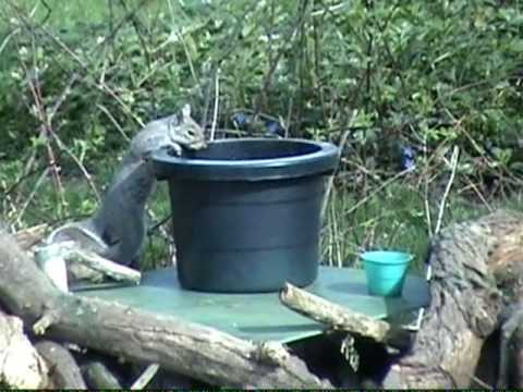 Funny Talking Animals Eric the Squirrel Episode 8 Favor.wmv