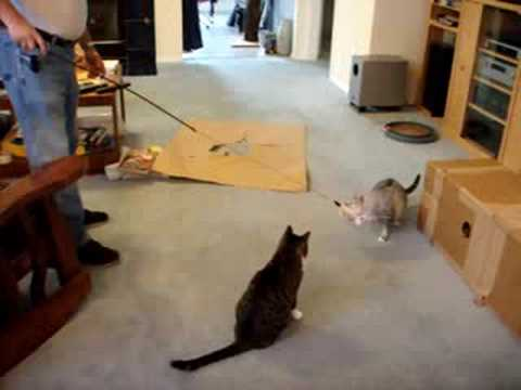 Cats playing with feather toy