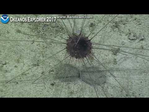 Okeanos on a Polo Seamount, within the Phoenix Islands Protected Area