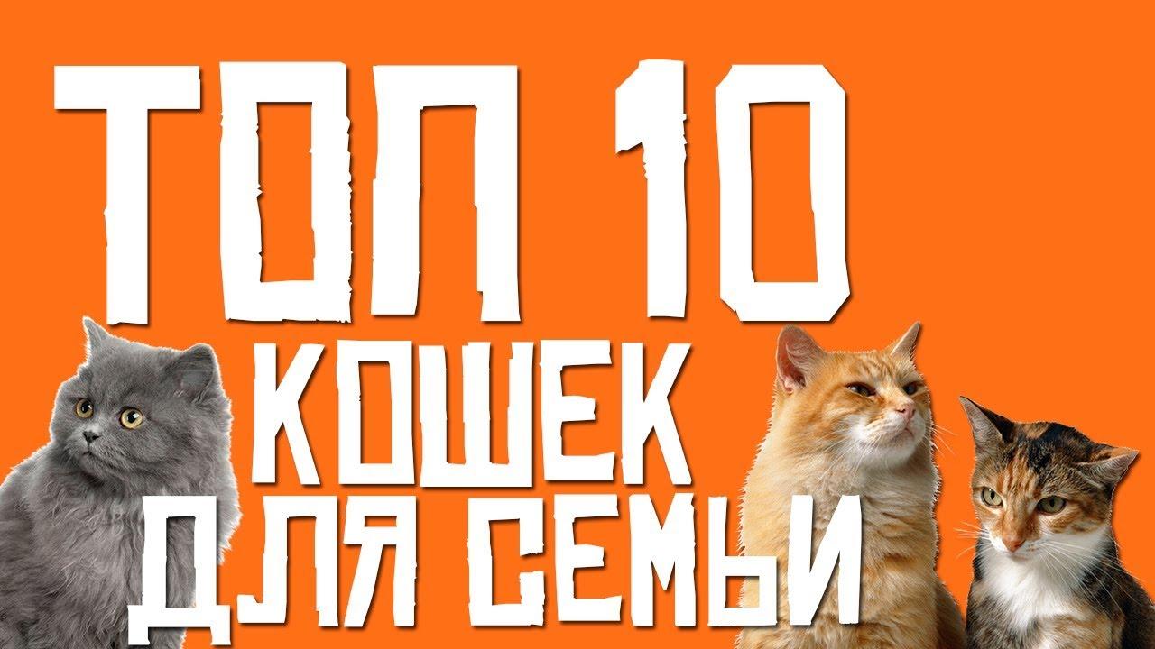 ТОП 10 КОШЕК ДЛЯ СЕМЬИ (Лучшие кошки для семьи)