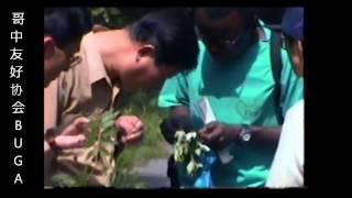 DIPLOMADO Y ENTRENAMIENTO DE MEDICOS DESCALZOS EN MEDICINA TRADICIONAL CHINA - 赤脚中医医生