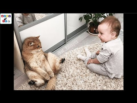 a-cute-baby-and-a-cat---a-baby-and-a-cat-play-extremely-funny