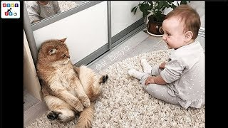 A cute baby and a cat - A baby and a cat play extremely funny