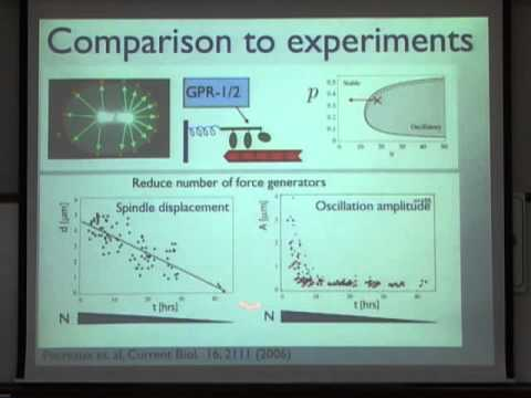 Theoretical Approaches to Cellular Force Generation and Dynamics
