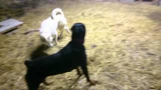 communication canine chien categorisé