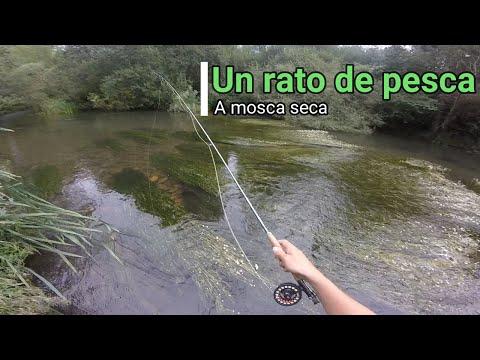 un-rato-de-pesca-a-mosca-seca