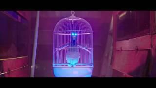 Save Me-The Parakit ft.Alden Jacob