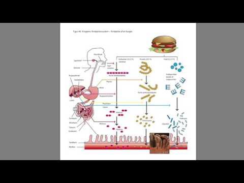 biologi til tiden