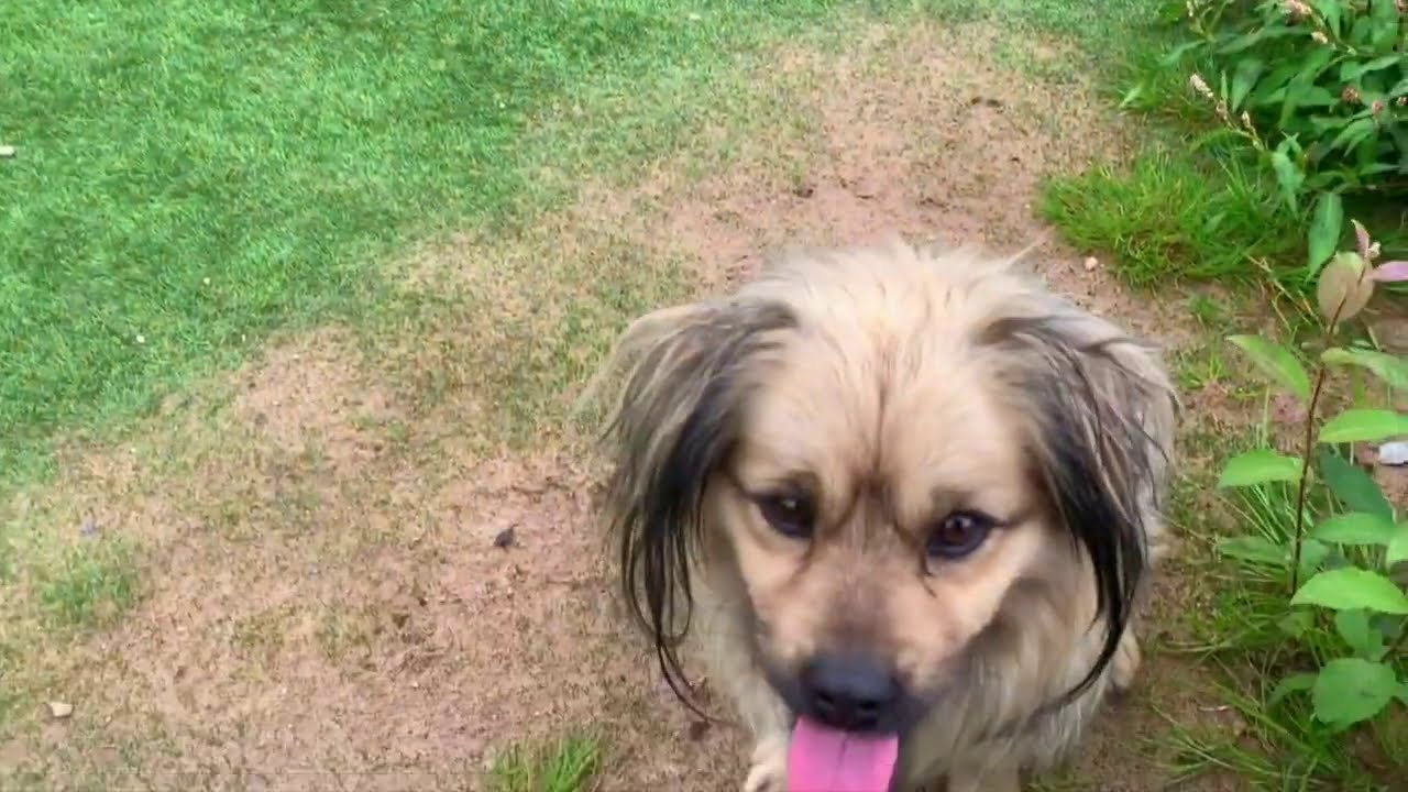 Download Pig and Dog Meeting - Interesting Moments