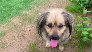 Pig and Dog Meeting - Interesting Moments