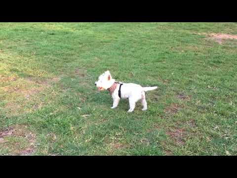 SEO Sydney Services for Dog Day Care and Dog Walking