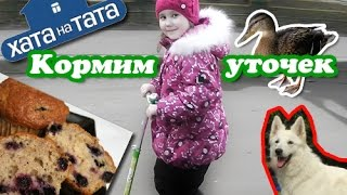 """Секрет пышной шарлотки / Подсела на """"Папа попал"""""""