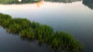 Нерест карася на вонючке в Минске.(, 2011-05-23T15:16:48.000Z)