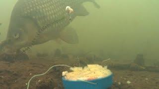 видео Анисовые капли для рыбалки