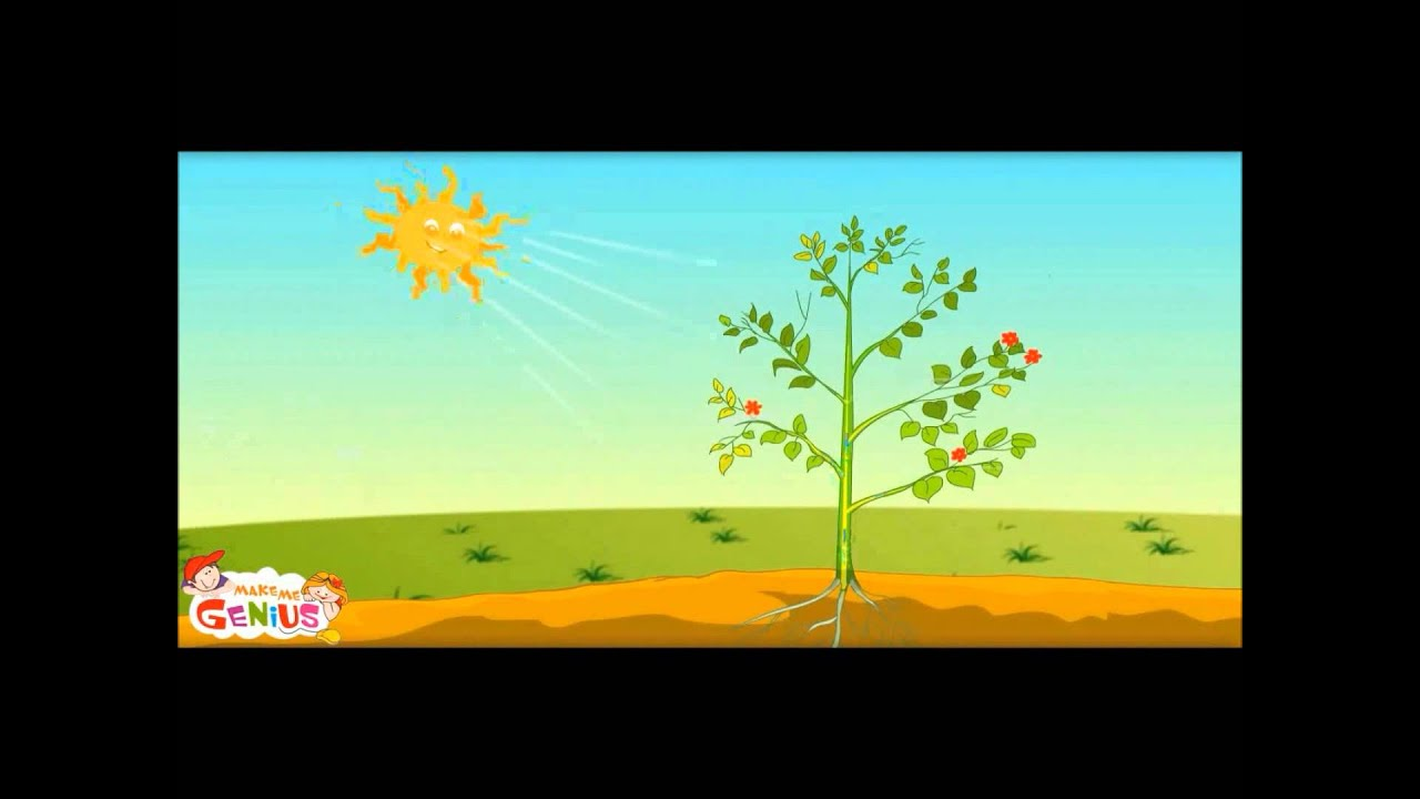How Plants Make Food Ep 1 School Education Video