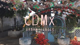 CDMX | urban jungle