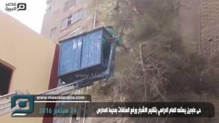 بالفيديو| تقليم الأشجار ورفع المخلفات بمحيط مدارس