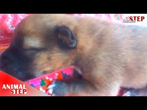 Newborn Puppy Screaming for Help from The Woods Under The Rain