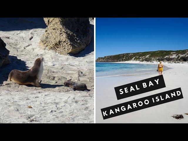 Seal Bay Virtual Tour on Kangaroo Island | Kangaroo Island Vlog #2