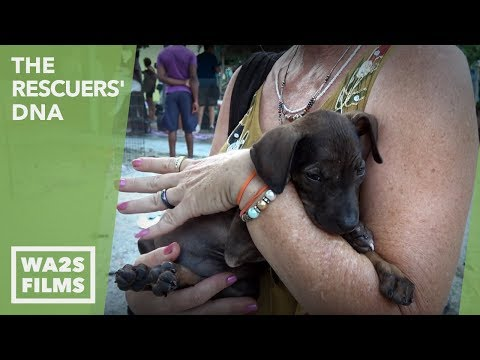 Hope For Sick Paws & Homeless Puppies in This Famous Resort Town: Ep 9 The Rescuers DNA