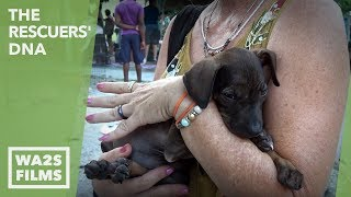 Hope For Paws: RESCUE SCARED PUPPY FROM FLOOD by Forgotten Dogs of the Fifth Ward