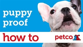 How To Puppy Proof Your Home (petco)