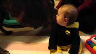 Baby Laughing at Boxer thumbnail